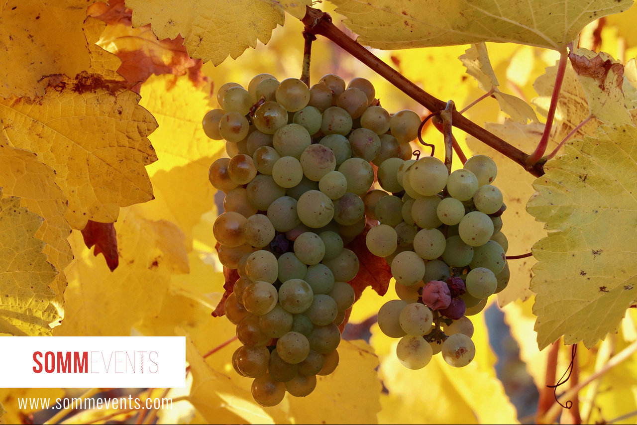 Fall Wines to Try